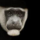 Monkey Portrait by Steve Bullock