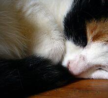 Lulu Dreaming by velveteen