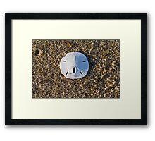 Cape Cod Sand Dollar Framed Print