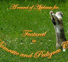Banner Domestic & Pedigree Cats by MarianaEwa