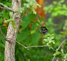 Tiny tree??? or HUMONGOUS BUTTERFLY??? by Jenny Ryan