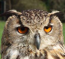 who's eyes by Patrick Ryder
