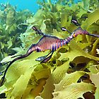 Seadragon by James Peake