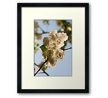 Blossoms I Framed Print