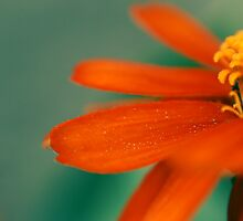orange on green by Aimelle