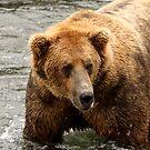 Alaskan Brown Bear by Gina Ruttle  (Whalegeek)
