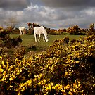Springtime on Bodmin Moor by Sharon Bishop