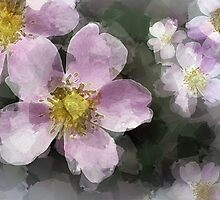 Wild Rose by CarolM