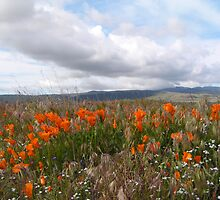 Antelope Valley California Poppy Reserve  by Bunny Clarke