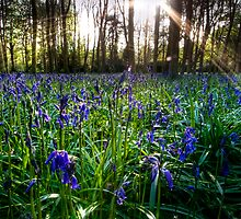 Badbury Hill Bluebells by igotmeacanon
