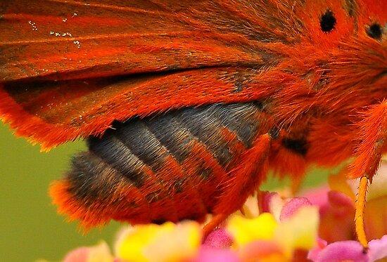 Branded Orange Awl  11 by Tony Wong