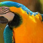 Parrot by SimplyScene