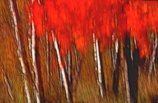 Autumn's Fire by Bill Morgenstern