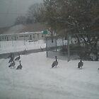 Geese Crossing by AuntieBarbie