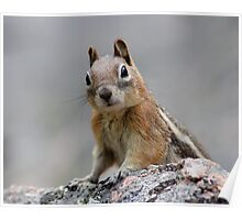 Ground Squirrel on Stage Poster