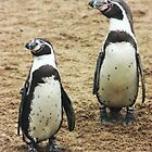 penguins by wendywoo1972