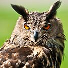 Eurasian Eagle Owl  by peterwey