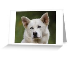 Working Dog Portrait Greeting Card