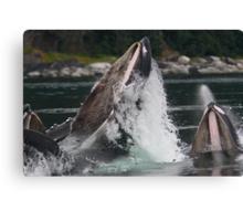 Humpback Whales Breaching Canvas Print