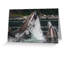 Humpback Whales Breaching Greeting Card