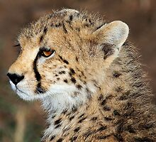 CHEETAH CUB - KENYA by Michael Sheridan