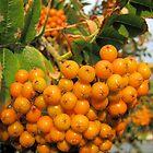 Summer berries by bonniebrae