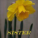 Daffodil Sister Card by Jonice