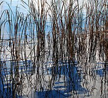 Reeds by KatRB
