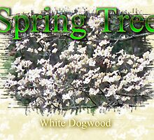 White Dogwood by tnlem