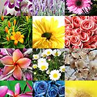 Flower Collage by ginaellen