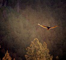 Flying High by kellinasf