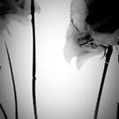 Flower IV by trbrg