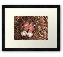 Brand New Chickadees Framed Print