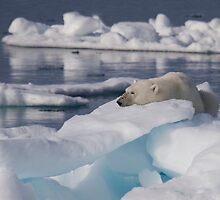 An Ice Rest by Steve Bulford