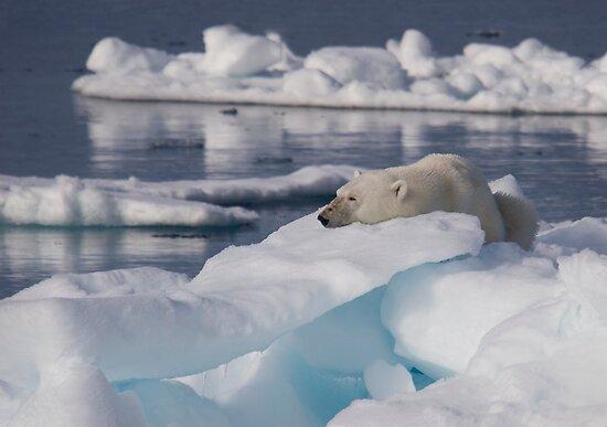 An Ice Rest by Steve Bulford