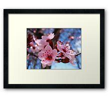 Blossum Song Framed Print