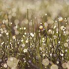 Breathe by Julia Wang