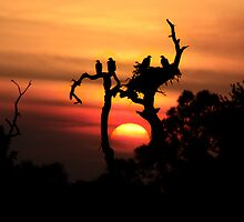 AWSOME EAGLE TREE SUNSET by TomBaumker