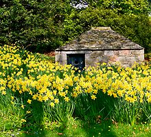 Dwelling Among The Daffodils  by Larissa  White Edwards