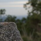 its a rock.. in macro style by lovethebeach16