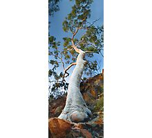 Ghost Gum tree Photographic Print