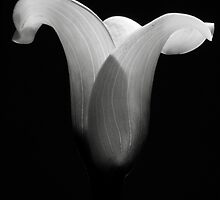 Calla by Samuele Puricelli