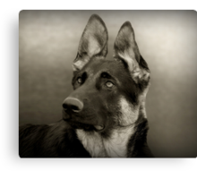 Indy in Black & White Canvas Print