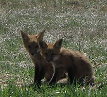 There goes the neighborhood (baby foxes) 02 by janetmarston