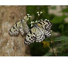 Mirror? ---Paperkite Butterfly Photographic Print