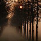 A misty sunrise lane by jchanders