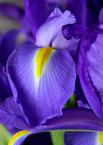 Iris III by Richard Keech