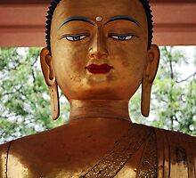 looking inward. buddha jayanti, new delhi by tim buckley | bodhiimages