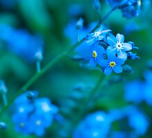 Forget me NOT by DonDavisUK