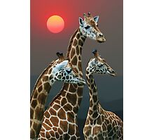 SUNSET WITH GIRAFFES 3 Photographic Print